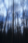 Woodland abstract