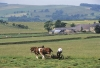Cutting grass with horses in Northumberland