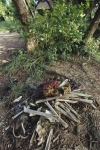 Human bones piled up at Choeung Ek Killing Fields Cambodia
