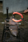 A blacksmith hammers a red hot horse shoe on his anvil, Northumberland