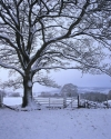 Snow covered tree and gate,  Northumberland, on the Hadrian's Wall National Hiking trail