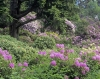 Cragside House and gardens in Northumberland with Rhododendron in full bloom. England UK