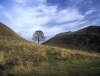 Sycamore Gap on Hadrians Wall, Northumberland
