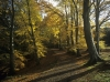 Autumn woods at Allenbanks in Northumberland